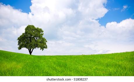 Tree on green field, cloudy sky