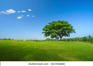 Tree on green field over blue sky