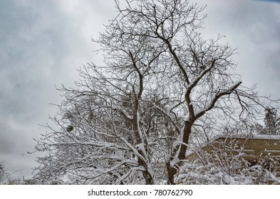 Tree on grey sky background