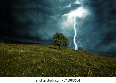 tree on a hill during a thunderstorm