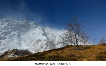 Tree on a hill in front of snow covered mountains in front of a blue sky in Valle di Viso