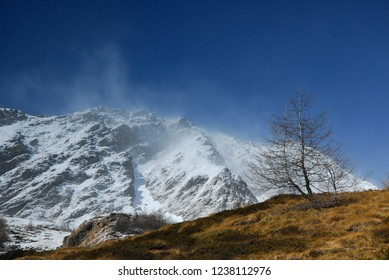Tree on a hill in front of snow covered mountains and a blue sky in Valle di Viso