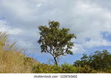 tree on hill at Khao Lon mountain in Thailand