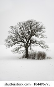 Tree on hill at winter. The ground is coverd with snow.