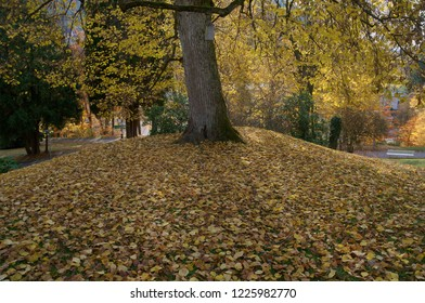 A tree on a hillock covered in autumn leaves.