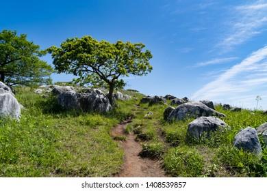 Tree on a karst plateau in Fukuoka prefecture, JAPAN. It is Hiraodai of karst plateau.