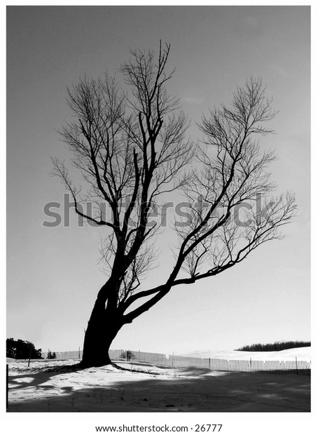 A tree on a knoll in Shelburne, VT. January 2003