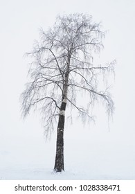 tree on the lake shore in winter