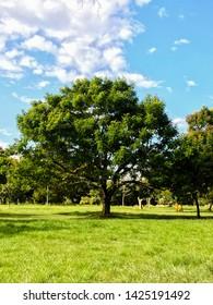 Tree on Marinha from Brazil park