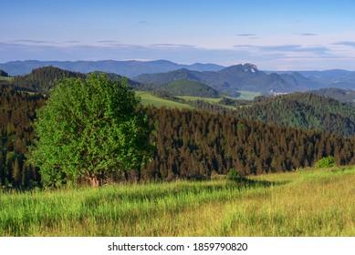 tree on the meadow in mountain scenery - Shutterstock ID 1859790820