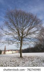 Tree on meadow in winter - Gelsenkirchen, Germany