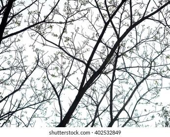 Tree on mid day