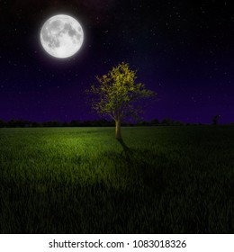 Tree on night meadow lit by moon
