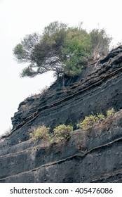 Tree on precipice