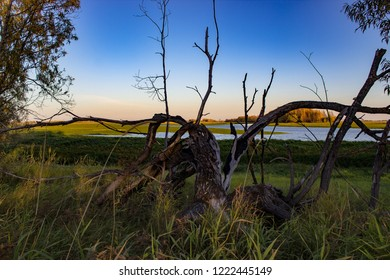 a tree on the river bank where long ago lightning struck