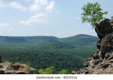 Tree on rock