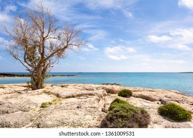 A tree on a rocky and wild coast of Elafonisi beach. The island of Crete, Greece, Europe.