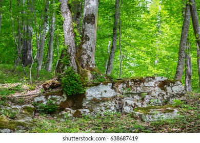 Tree on a stone