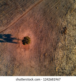Tree on Sunburnt Country