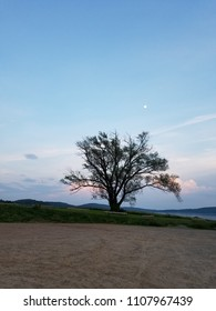 tree on the sunset