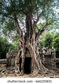 Tree on Ta Som. Angkor Wat. Siem Reap. Cambodia.