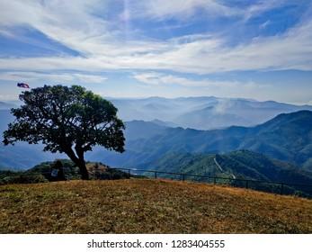 The tree on top of Doi Puico Mt. Thailand. Doi Puico, Mae Hone Sorn, Thailand