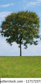 Tree on the top of hill with path of green trampled grass and blue sky
