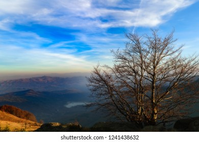 A tree on a top of a mountain