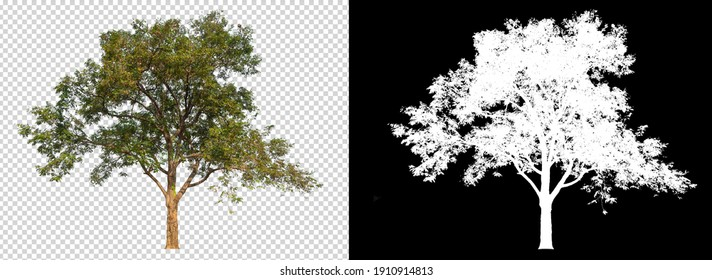 Tree on transparent background picture and alpha channel with clippings path