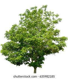Tree on white floor