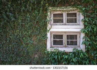 Tree on the window background