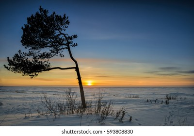 Tree on the winter beach. Sunset.