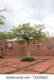Tree on the yard
