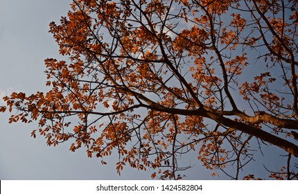 A tree with orange leaves in the autumn season unique natural photo