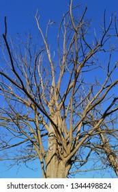 Tree over blue sky