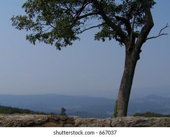 Tree over Shenandoah Valley