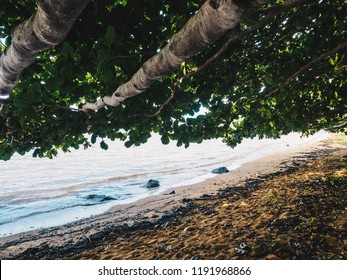 Tree overhanging tropical beach