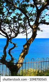 Tree Overlooking Bay