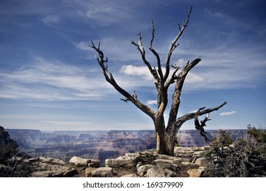 Tree Overlooking Grand Canyon