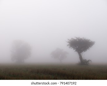 The Tree in The Paddy Field in The Fog