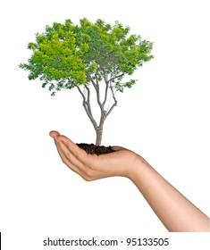 tree in palm as a symbol of nature protection
