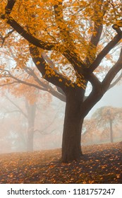 Tree in a park at foggy autumn morning