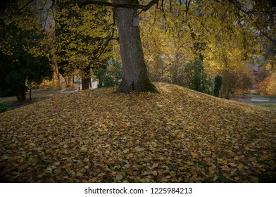 A tree in a park on a hillock covered in autumn leaves.