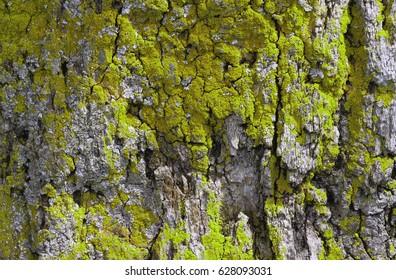 tree pattern trunk