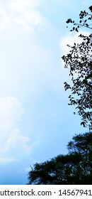 Tree photography with skyblue background