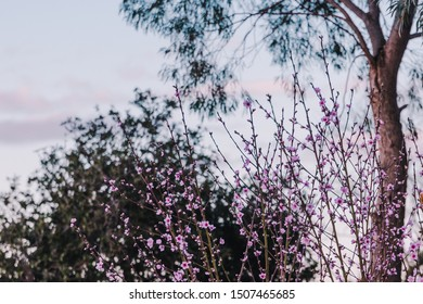 tree with pink blossoms all over its branches, spring inspired shot