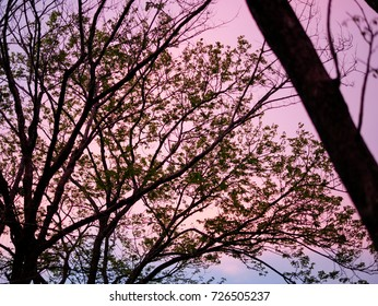 tree and pink sky