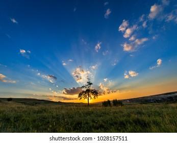 A tree place in the sunset rays, near Bencecu de Jos village, Romania