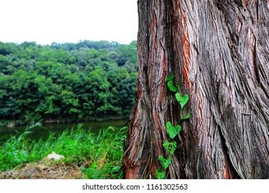 tree plan goup