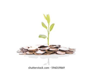 tree plant growing on gold pile coins. concept investment money finance.